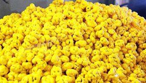 بازار خرید شکر پنیر خشک شده بجنورد